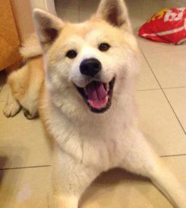 森本慎太郎の実家の床と犬の画像