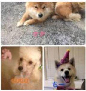 森本慎太郎の自宅の飼い犬の写真