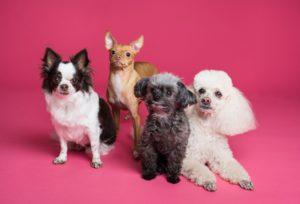 四匹の様々な犬種の犬達