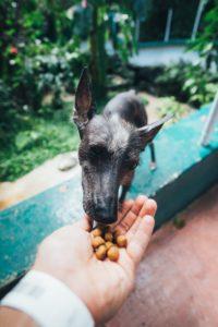 犬に餌をあげる手