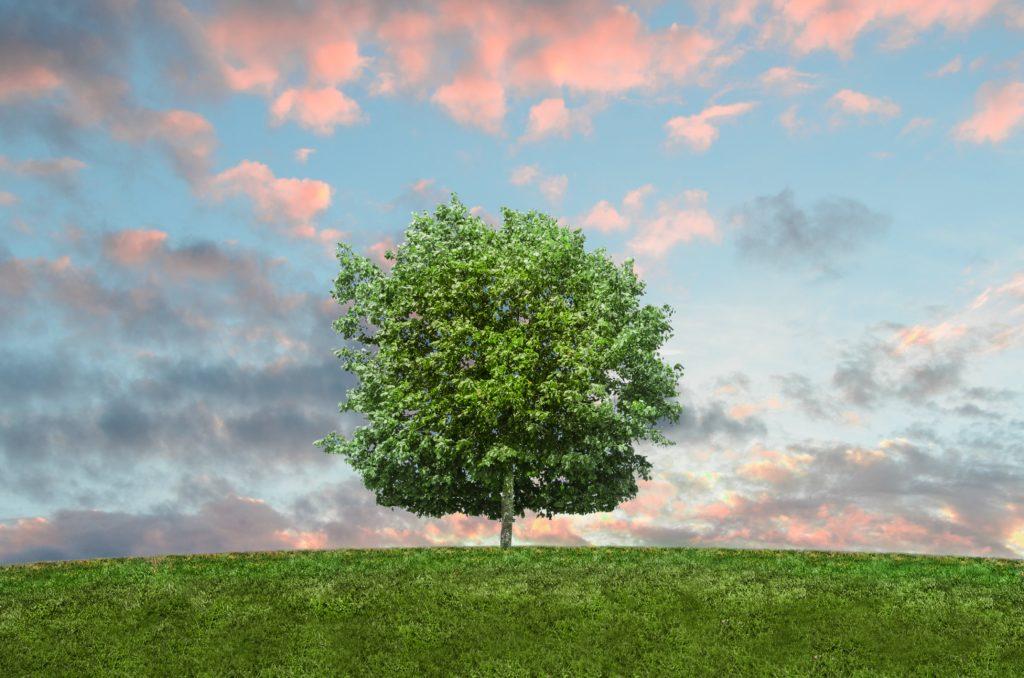 大きな1本の木