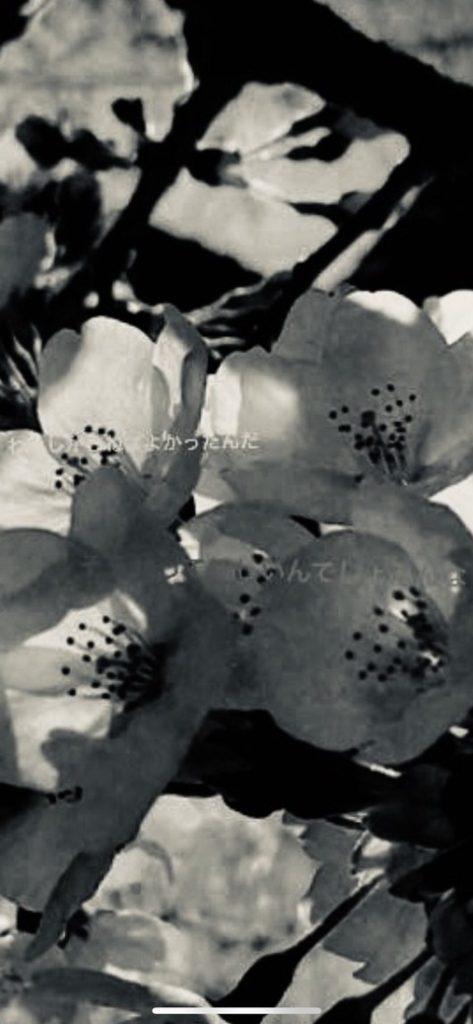 白黒加工した足立梨花のインスタストーリー